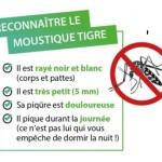 Moustique_Tigre_Reconnaitre_433_452