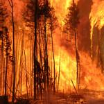 2019-08-14-wildfires
